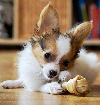 Одежда для игрушечных собак