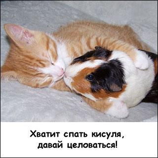 Смешные животные с надписями